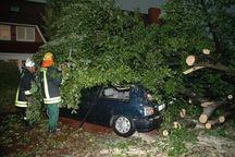 In Kölln-Reisiek begrub ein Baum zwei Autos unter sich.
